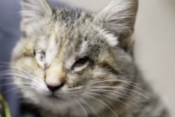 Oregon Humane Society video