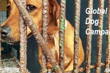 Global Dog Campaign, WellBeing International and AHPPA - Animal Shelter, Costa Rica