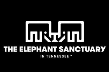 Elephant Sanctuary Video