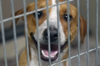 Humane Society of Austin & Travis County Video